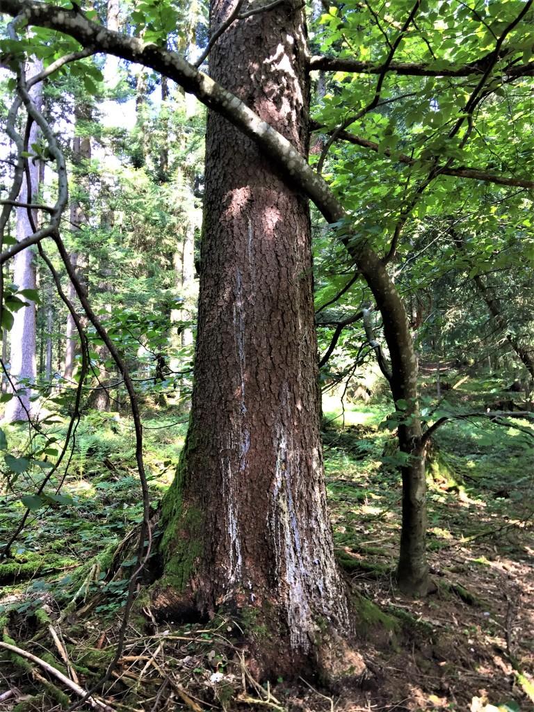 Waldbaden Scheffau